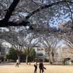 西川口駅東口、並木公民館隣の公園の桜が満開!(20180325)