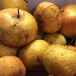 延辺特産の果物、苹果梨(りんご梨,ピングオリ)