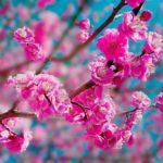 春分の日は毎年微妙に日付変動、2021年は3月20日(土)