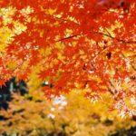 秋分の日は毎年微妙に日付変動、2021年は9月23日(木)